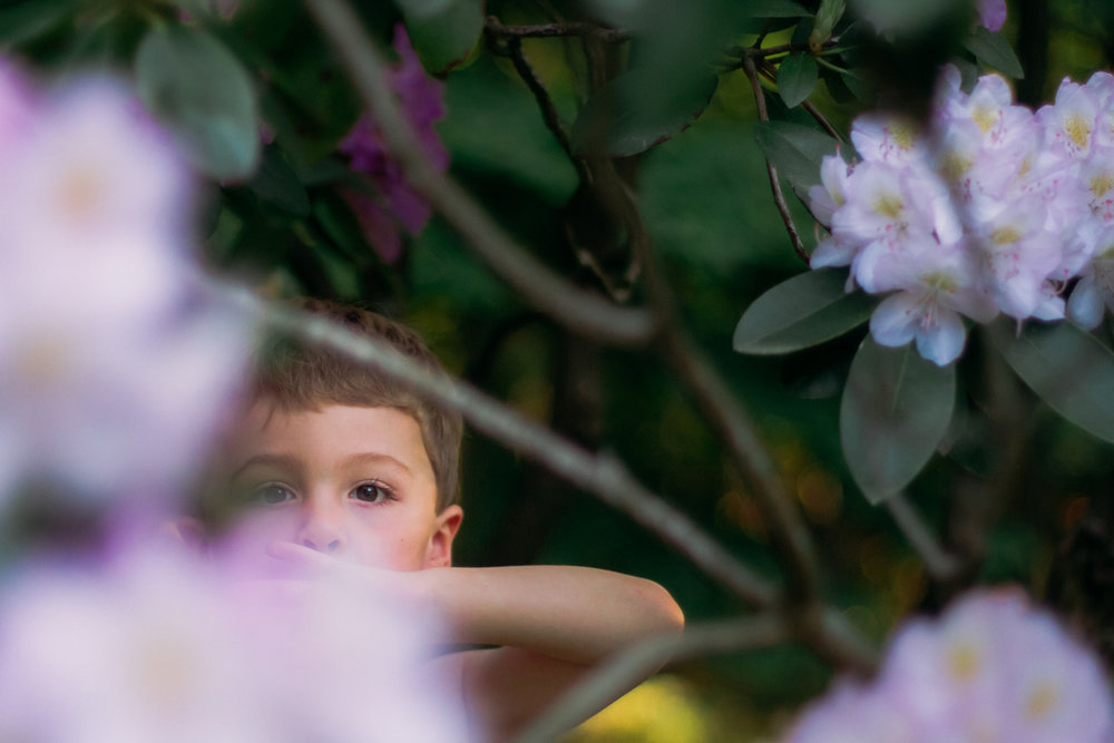 flowers and family in ridgefield - laura barr photography