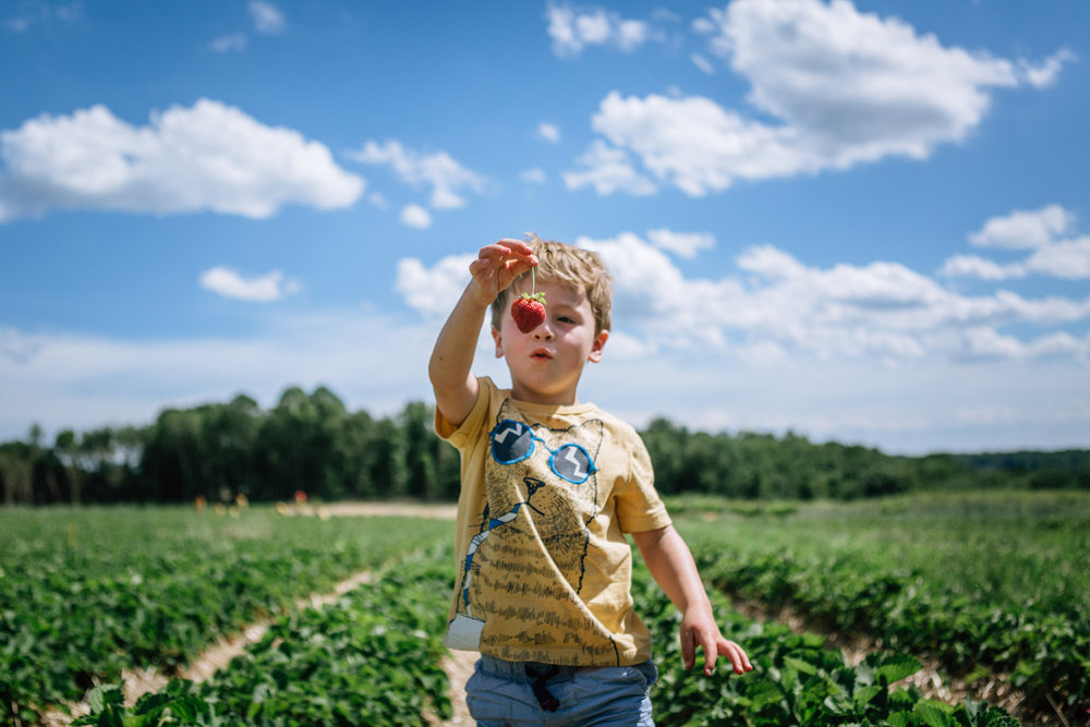 strawberry eye jones farms by laura barr photography