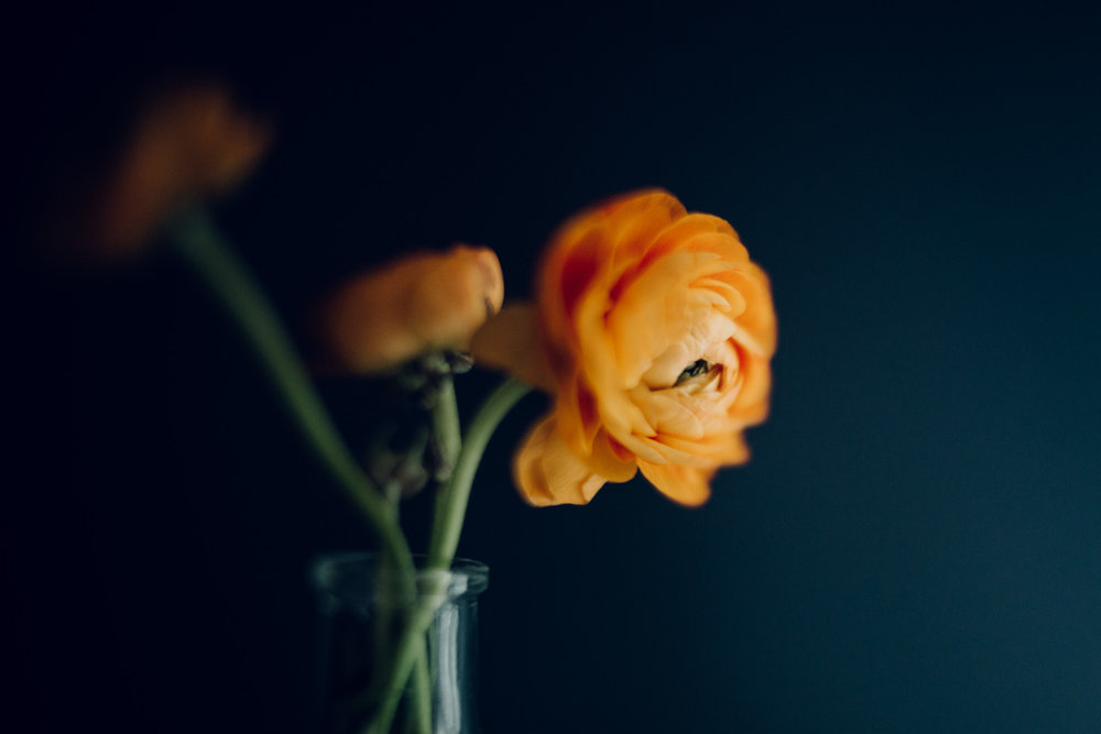 ranaculus_freelensed_by_laura_barr.jpg