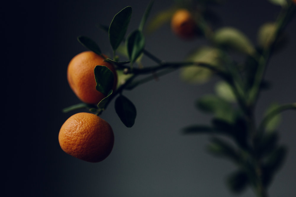 orange tree 2 by laura barr photography