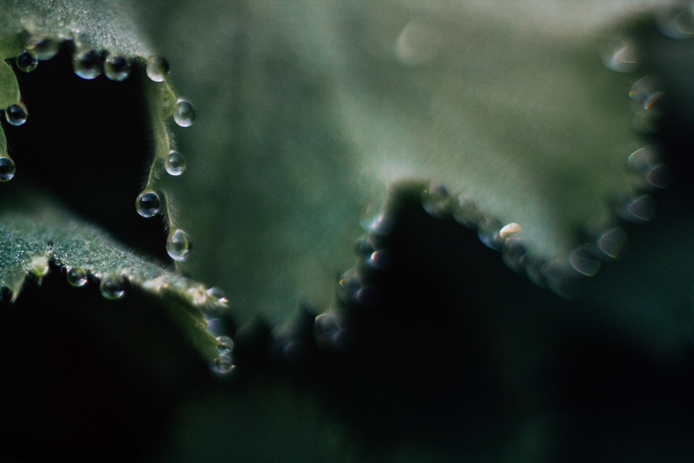 free lensed morning dew by laura barr photography