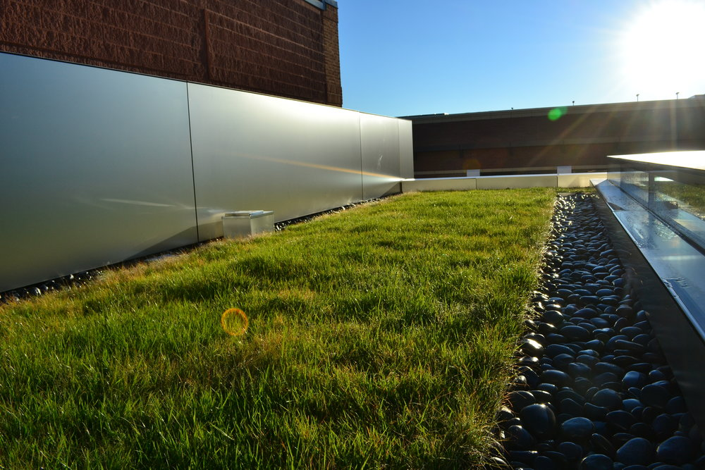 commercial green roofs