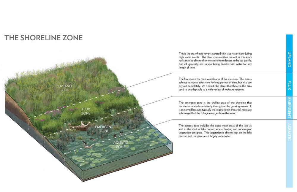 shoreline+zone.jpg