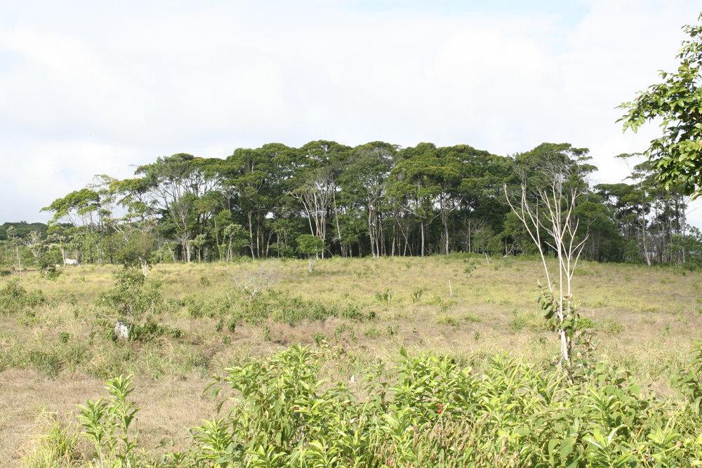 Former Pasture