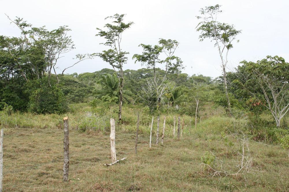 Agroforest