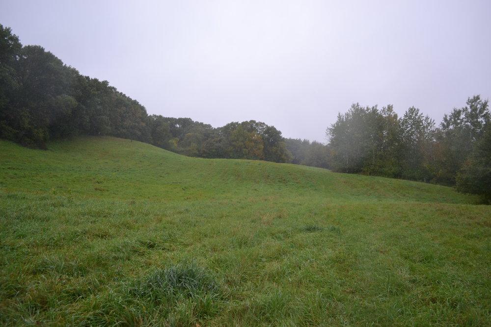 Pasture to Prairie