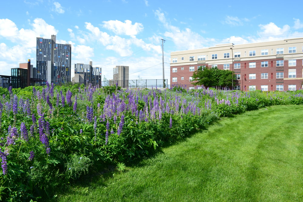 Urban Meadow_UrbanEcosystems_Mondale.JPG