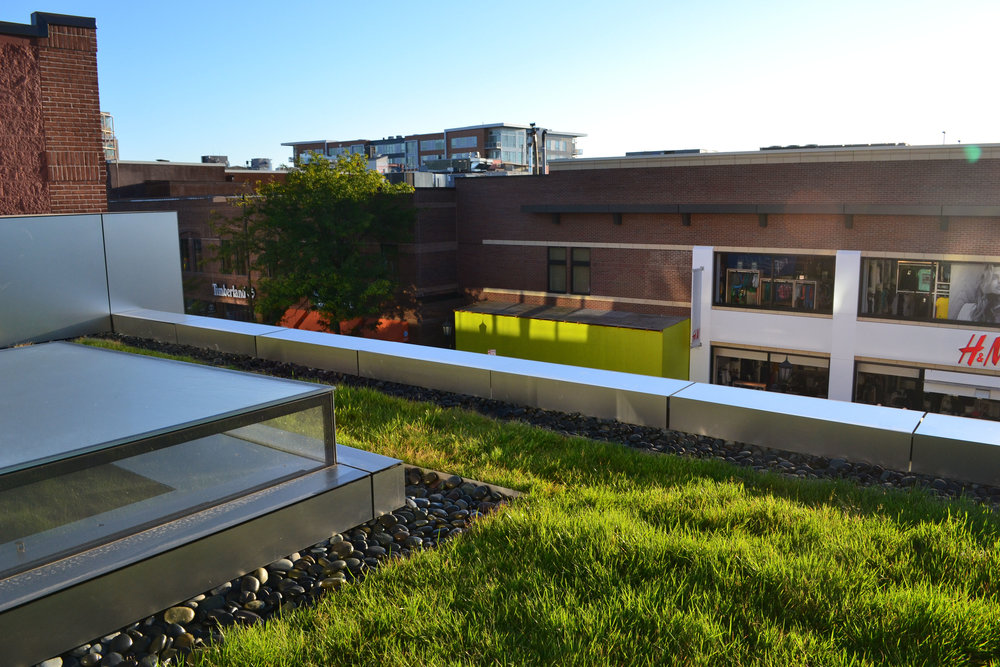 Commercial Green Roof