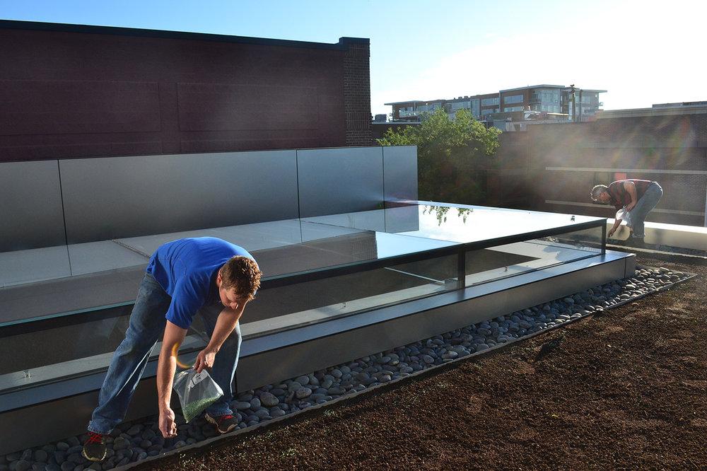 Apple Green Roof Install 1_.jpg