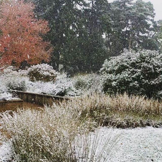 Snowy morn at Noerenberg Gardens. Do you design for this moment? . . #garden by Arla Carmichael and @threeriversparks #plants #snow #gardendesign #autumn #gardenlife #gardeninspiration #plantsofinstagram #plantsmakepeoplehappy #winteriscoming