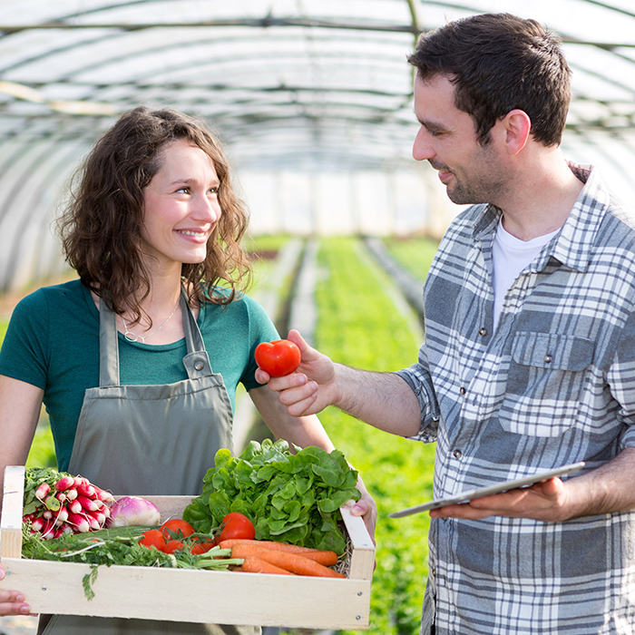 Man and woman in greenhouse with tablet discussing fresh vegetable packaging.