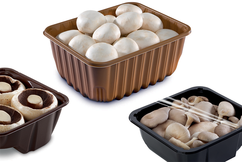 Black and Brown Mushroom Trays Filled with Mushrooms on White Background