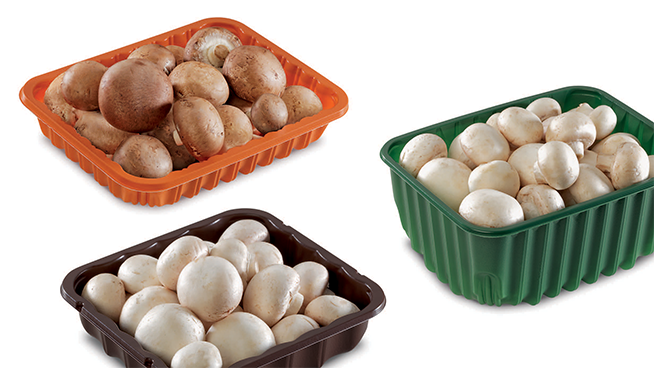 PET and PP Thermoformed Mushroom Packaging Trays