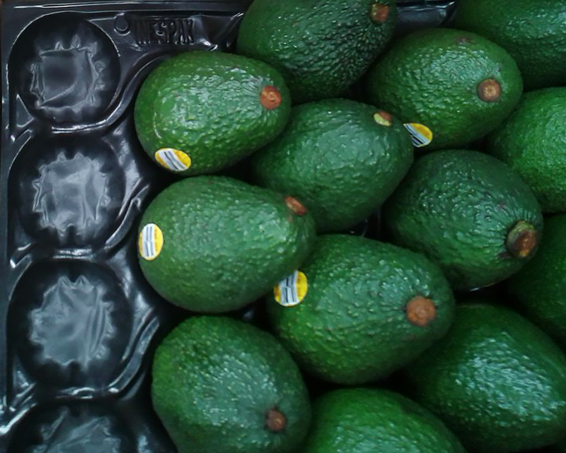 Avocado on black GrowPack Insert Tray in shipping flat