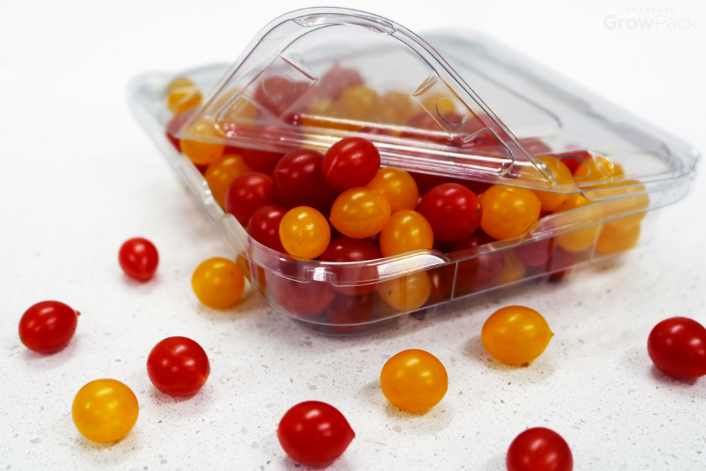 tiny red and yellow tomatoes in growpack easy pour clamshells on white background
