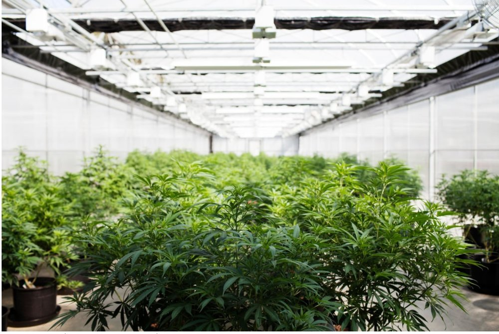 Medical Cannabis Cultivation Facility License -