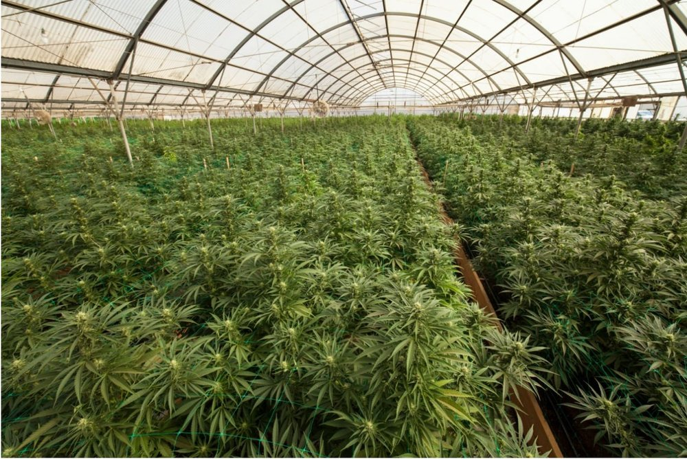 Medical Cannabis Cultivation Facility
