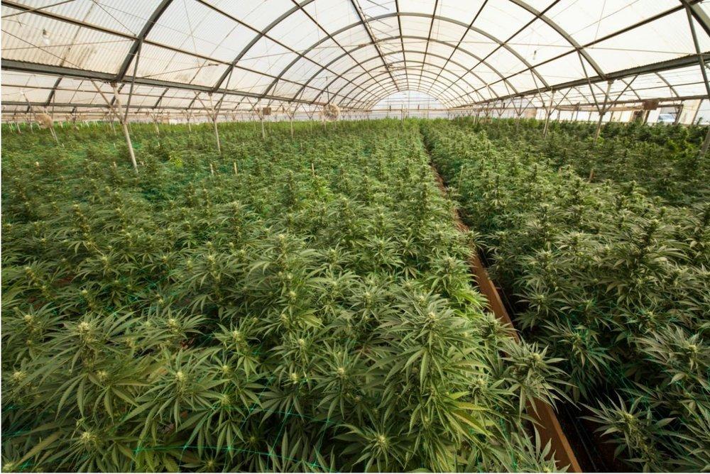 Medical Cannabis Cultivation Facility