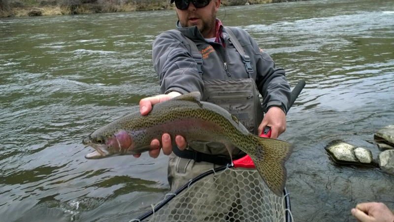 A hefty springtime rainbow on the Yakima river.