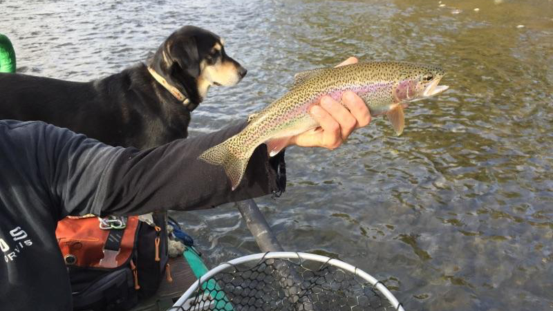 Yakima River Fly Fishing