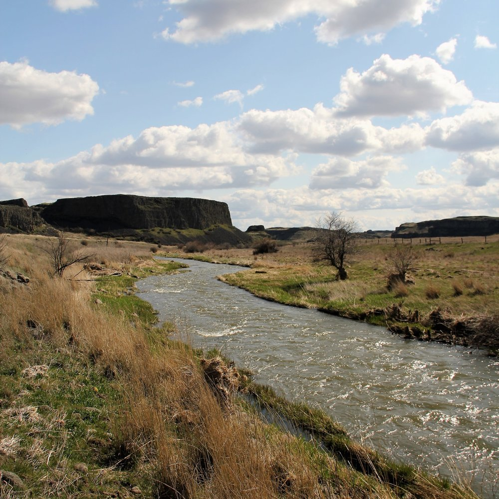 Eastern Washington Fly Fishing Creek