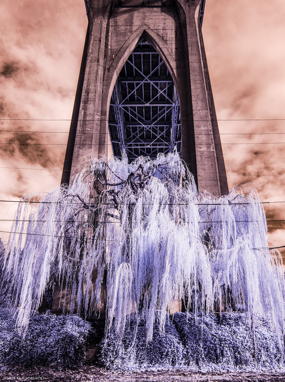 A mature willow tree gives contrast to a Gothic arch supporting the St. Johns Bridge in Portland, Oregon. Completed in 1931, the St. Johns Bridge is a steel suspension bridge that spans the Willamette River in north Portland. IR converted Nikon D750.  © 2016 Sam Forencich