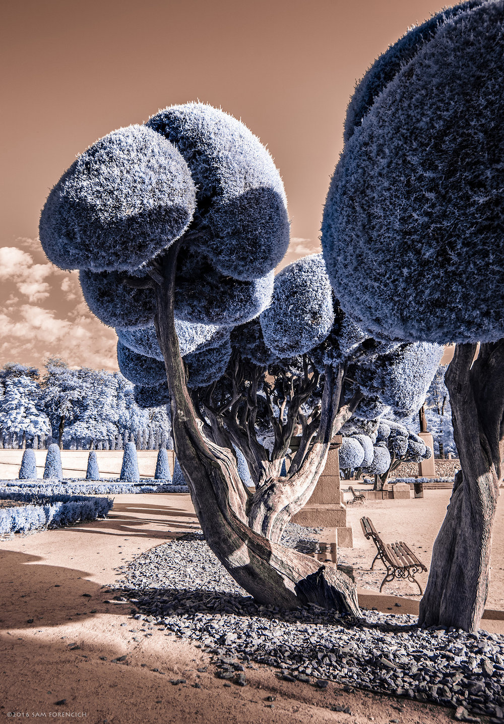 "Topiary trees decorate the grounds of Buen Retiro Park, Madrid, Spain. Parque del Buen Retiro, literally ""Park of the Pleasant Retreat"", or simply El Retiro, is one of the largest parks of the city of Madrid, Spain. IR converted Canon 5D Mark II.  © 2015 Sam Forencich"