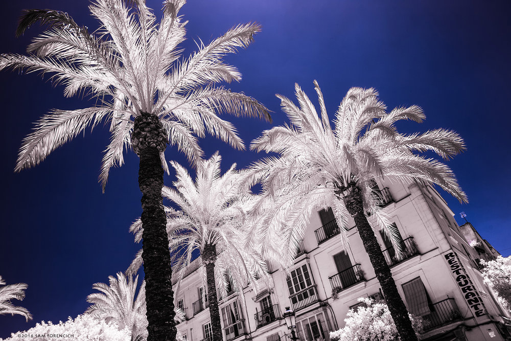 Palm trees decorate the Plaza de Arenal in the city of Jerez De La Frontera, Analucia, Spain. Channel swapped infrared, IR converted Canon 5D Mark II.  © 2015 Sam Forencich