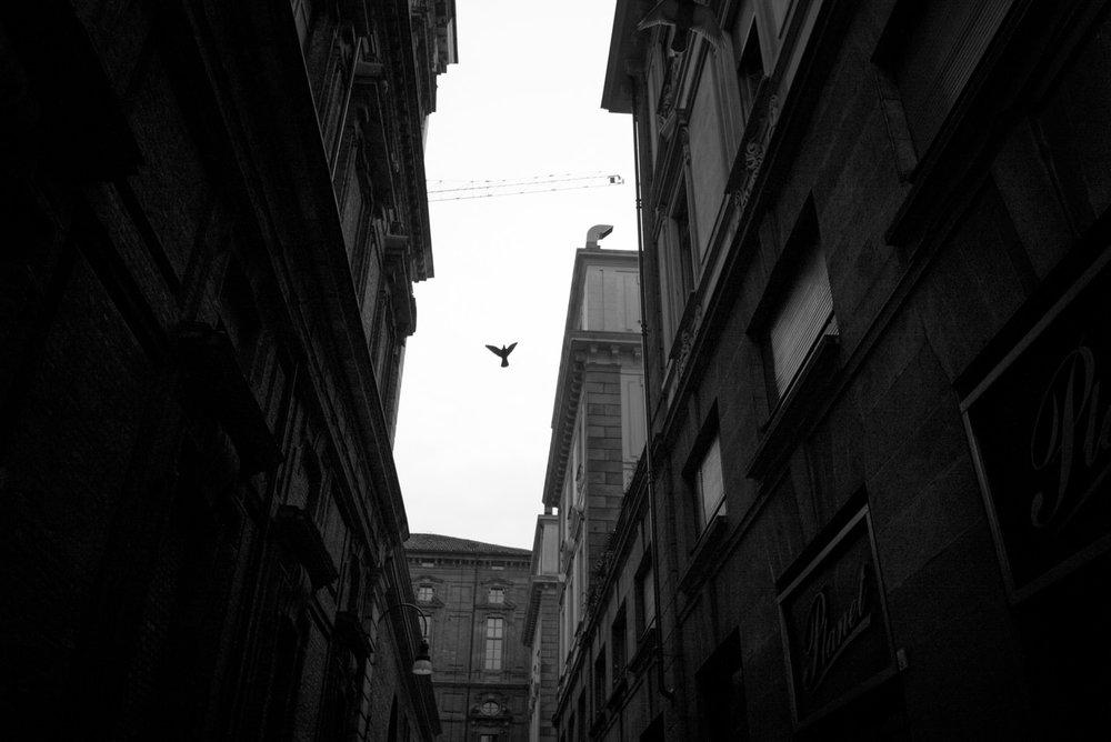 Portfolio_Street_Torino_2014_20.jpg
