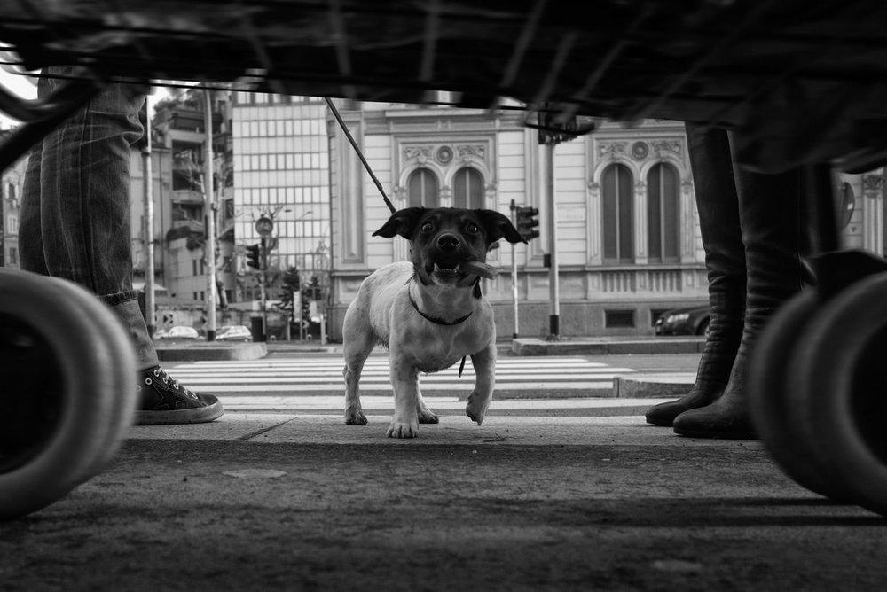 2015-Milano-Eolo-Perfido-Street-Photography-048.jpg