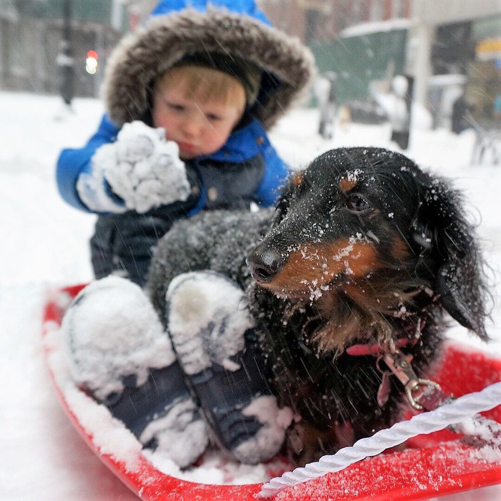 Sled with Dog 4.jpg