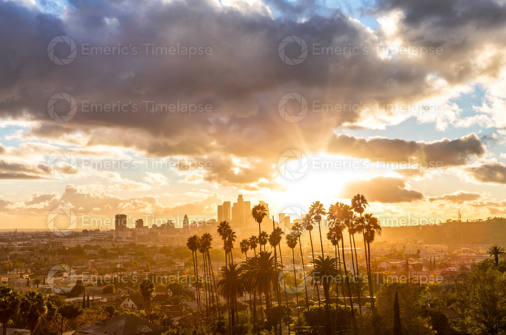 Downtown Los Angeles Golden Hour Sunset Palm Trees