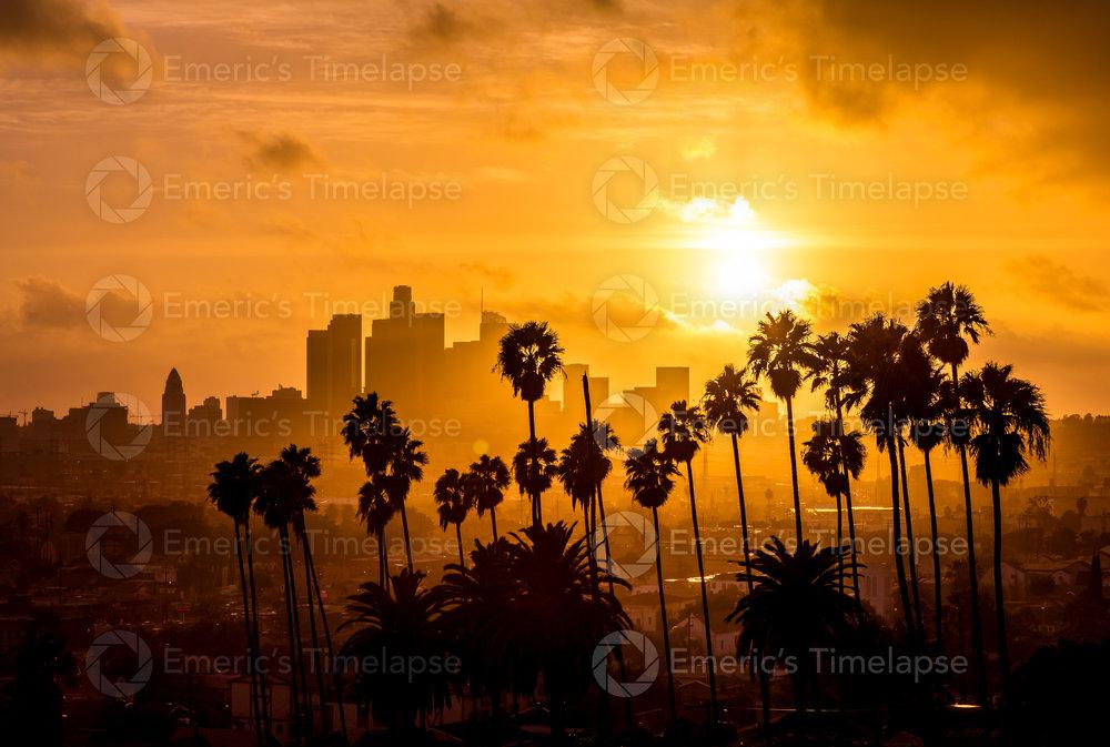 Los Angeles Palm Trees Sunset