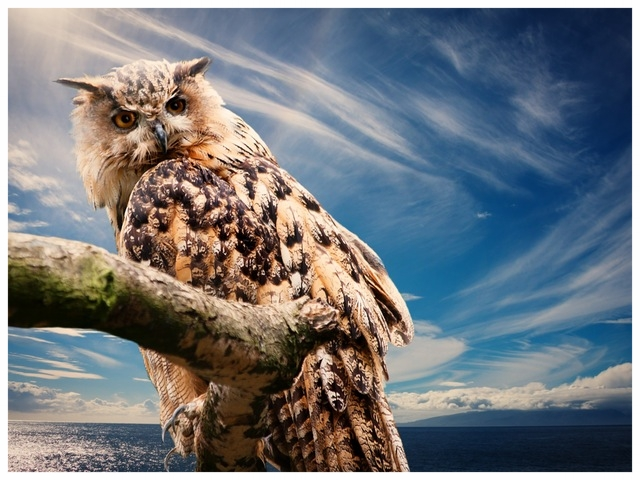 owl-nature-sky-clouds-39575.jpeg