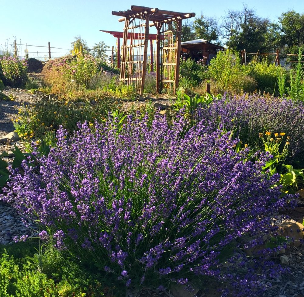 Garden lavender arbor.jpg