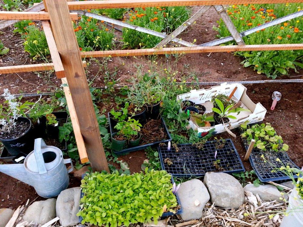 Garden planters.jpg