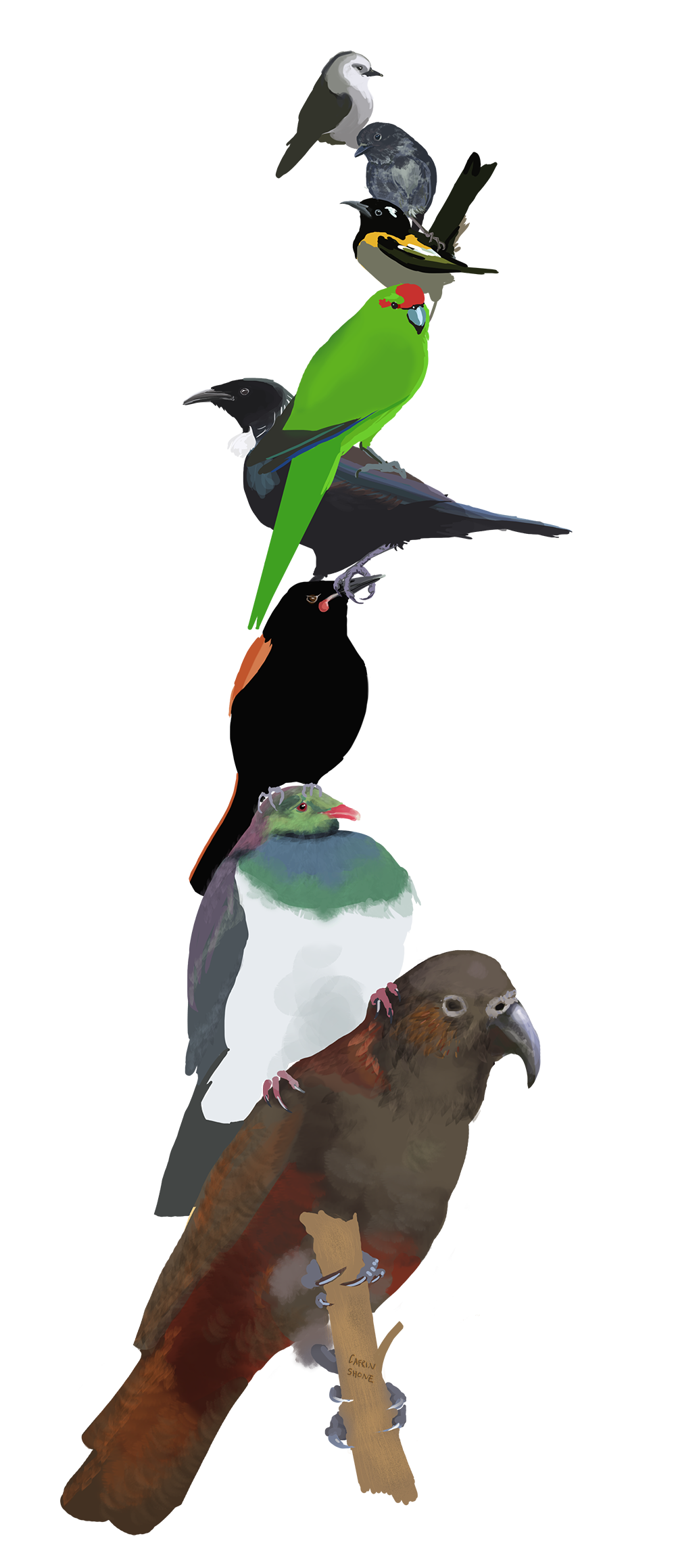 SMALL stack of birds copy.png