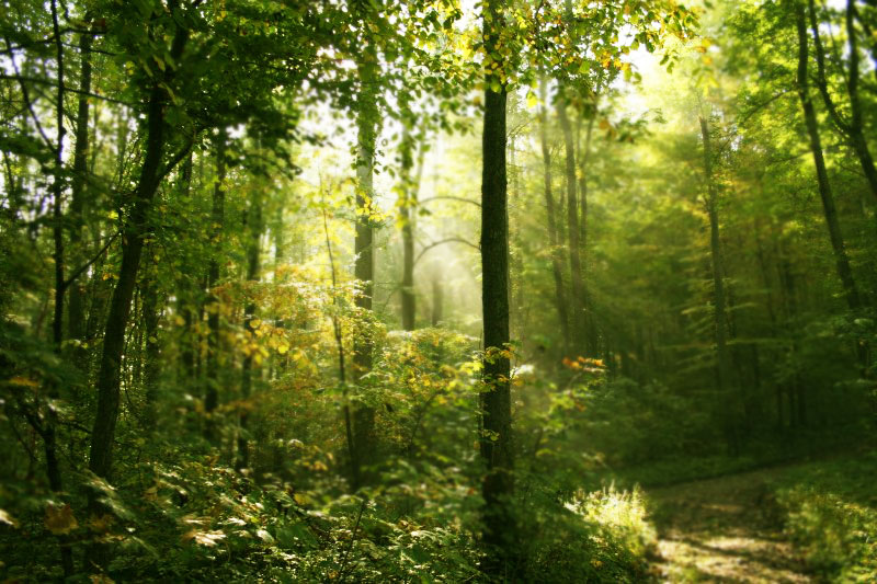 forest_light_01_by_smilega1.jpg