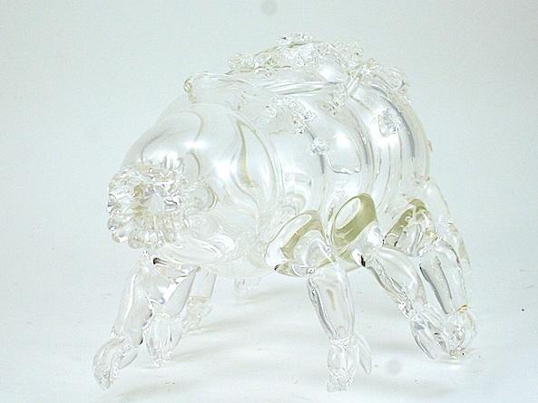 tardigrades.jpg