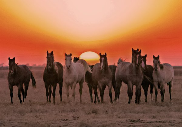 Buffalo Lake NWR Horse Sunset.jpg