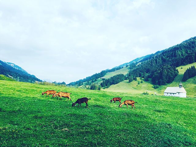 Some beautiful days with beautiful beings in the woods - #sangha #naturelovers #howtomakefirewithsticks #imwald #beautifulman #imwoldischalleatslos #yoga #bhaktiyoga #valleykirtaniyas
