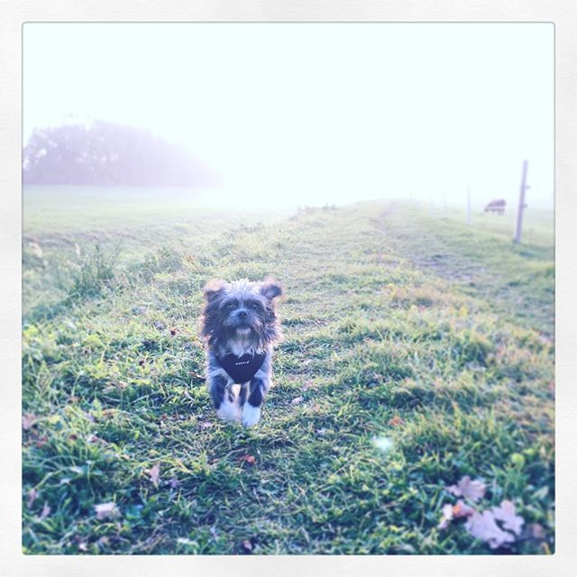 Fuhur back in action! #flyingdog #slaendle #dieunendlichegeschichte