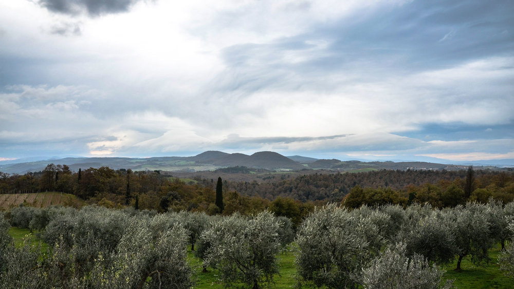 Olive groves under a dramatic Tuscan sky