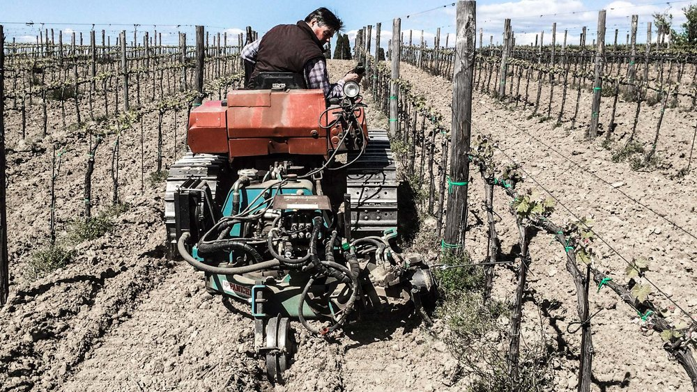 Working the land among our vines
