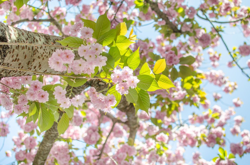 noe_spring_in_europe_2017-2.jpg