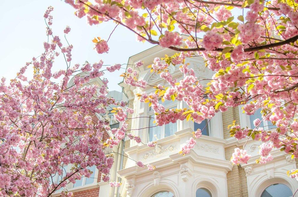 noe_spring_in_europe_2017-1.jpg