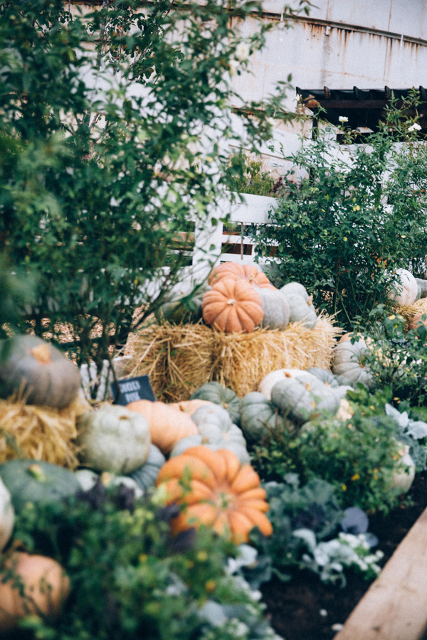 magnolia-market-pumpkins-waco-texas.jpg
