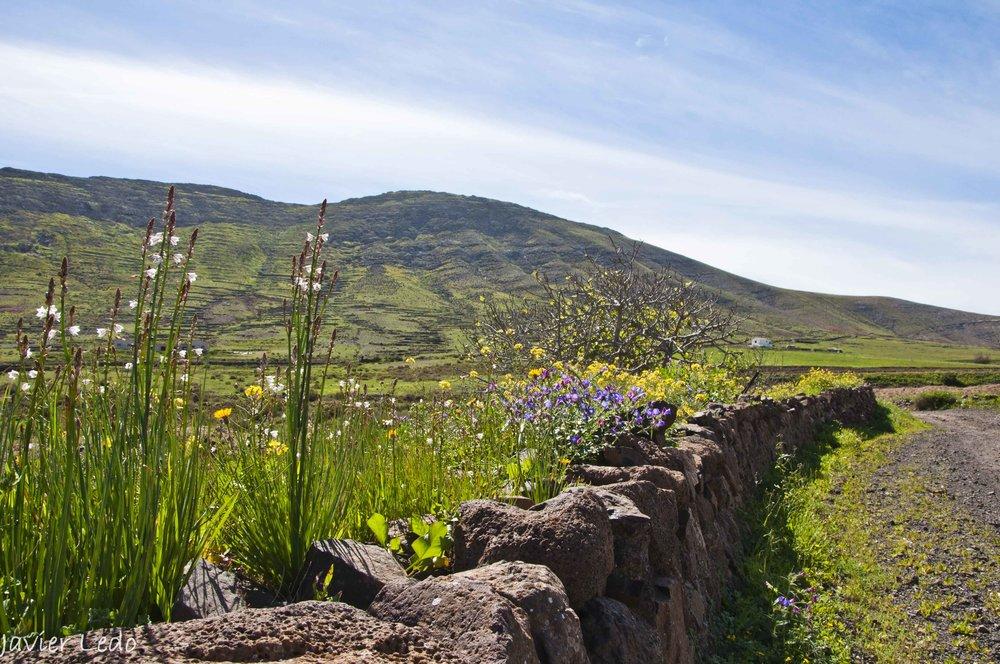 Primavera Valle de Tetir.jpg