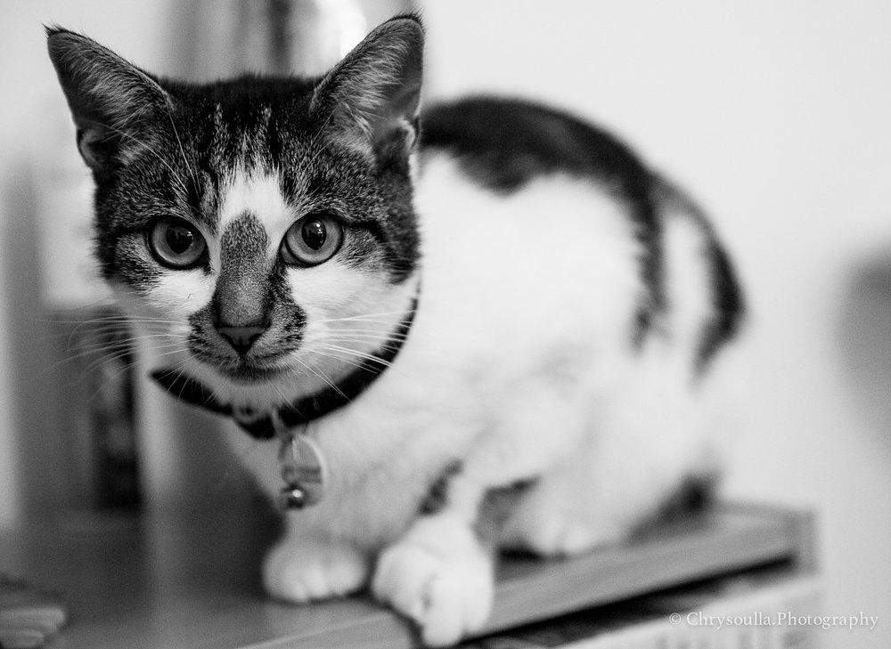 Catsck20161015-_JPR7113.jpg