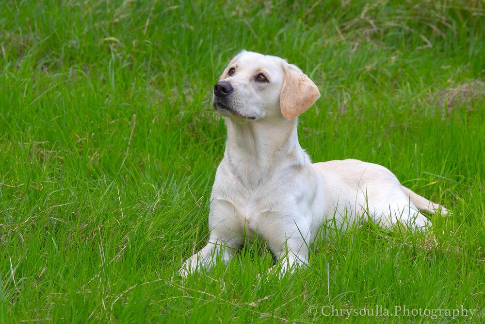 2016 DogTraining ckIMG_1028.jpg